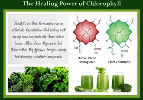 chlorophyll2
